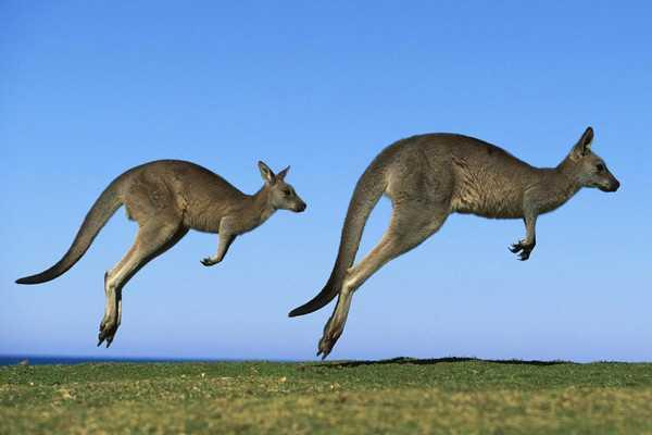 【澳大利亚(凯恩斯大堡礁)新西兰12日精华游】首站墨尔本、味蕾享受、惬意旅程