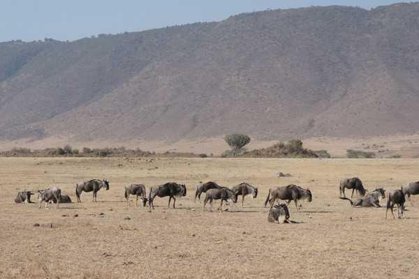【东非坦桑尼亚惊艳传奇10日】欣动大非洲动物碰撞海岛