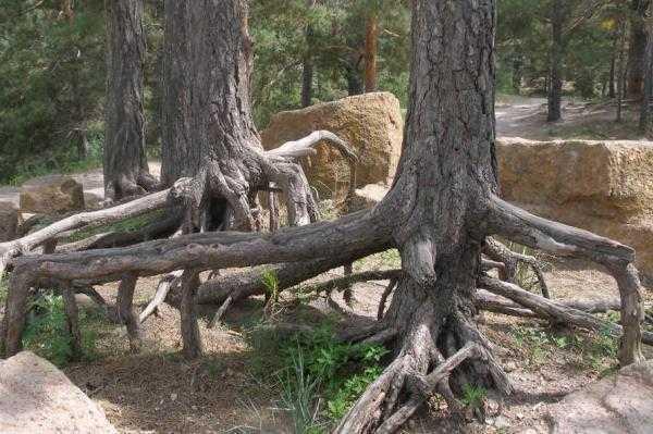 海拉尔国家森林公园