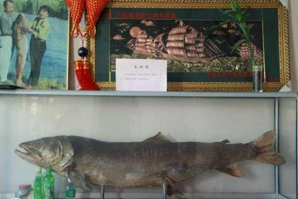 大红鱼酒店