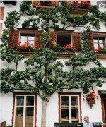 哈尔施塔特Hallstatt,欧洲最古老的聚居村【奥地利旅游攻略】