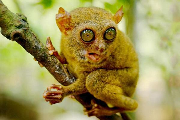 眼镜猴游客中