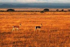 肯尼亚坦帕-那些在肯尼亚坦帕不能错过的