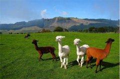 新西兰七日游怎么样【新西兰旅游攻略】