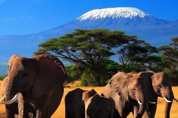 【肯尼亚8日游】含两晚马赛 全程四-五星级标准酒店