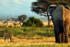 肯尼亚旅游_肯尼亚旅游攻略
