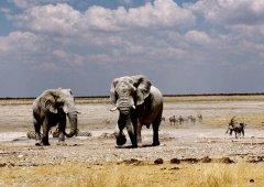 坦桑尼亚旅游需要花多少钱_坦桑尼亚旅游攻略