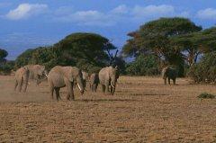坦桑尼亚签证_坦桑尼亚签证办理