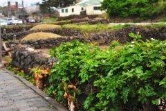 济州岛旅游攻略_带你走遍济州岛