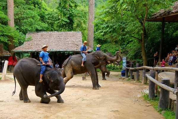 马沙大象营