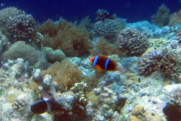 帕劳水底珊瑚