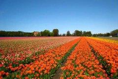 荷兰自助旅游-荷兰好玩的地方