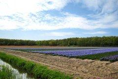 荷兰旅游路线推荐