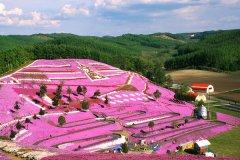 北海道旅游价格-去日本旅游需要多少钱