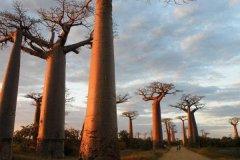 马达加斯加旅游安全吗-马达加斯加旅游需要多少钱