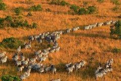肯尼亚旅游攻略-肯尼亚旅游安全问题