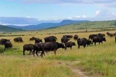 肯尼亚旅游景点推荐-肯尼亚哪里看野生动物