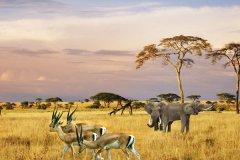 南非旅游攻略-南非旅游习俗禁忌