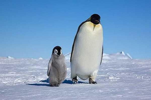 彭纳肖企鹅中