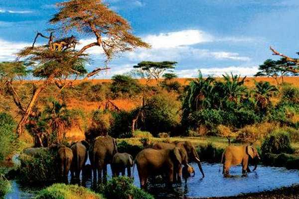 纳库鲁湖国家