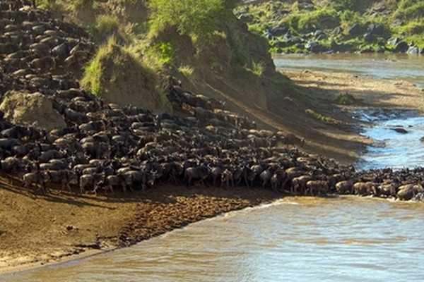 非洲马拉河