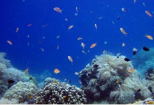 巴里卡萨岛浮潜