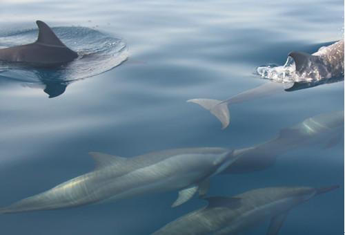 罗威纳看海豚
