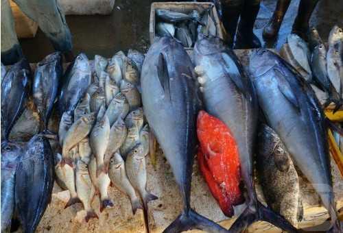 鱼市Fish Market