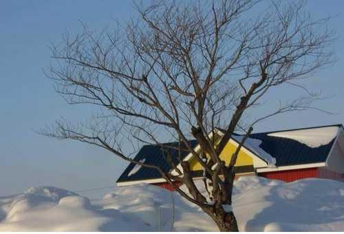 二世古滑雪场
